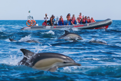 Terrace-Residence-Albufeira-ACT-08-Dolphins-Driven