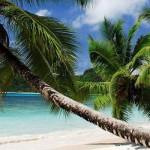 Оффшорная компания на Сейшельских островах и банковский счет в Standard Chartered Bank в Гонконге удаленно