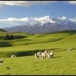 Экономические свободы Новой Зеландии – 4 место в мире