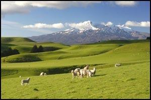 экономические свободы новой Зеландии