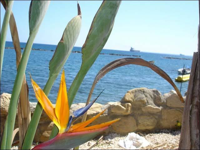 Кипрское гражданство за инвестиции