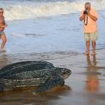 Наблюдаем за черепахами у берегов Доминика и получаем второй паспорт