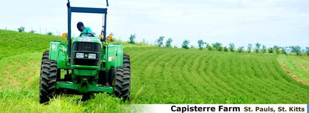 Ферма Capisterre Farm