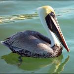 Наблюдения за птицами на Доминике- стране вашего второго гражданства…