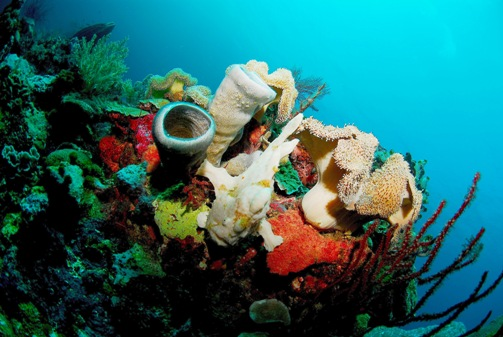 Champagne Reef_3