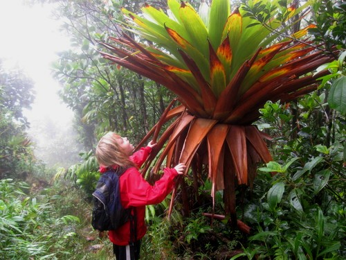 Dominica MorneTrois Pitons_1