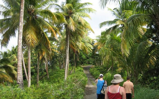 Общины Доминики