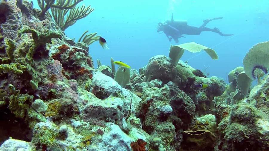 Подводный мир Сент-Китс и Невис