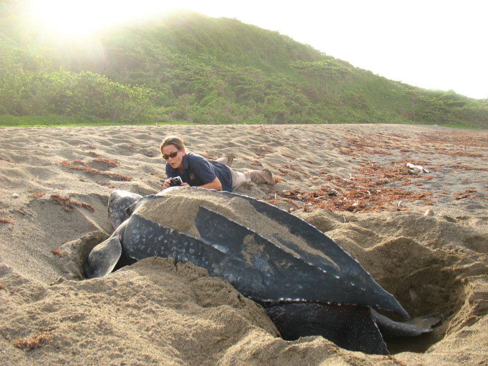 черепахи Сент-Китс и Невис