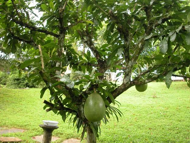 второе гражданство Антигуа – богатая флора островов Антигуа и Барбуда