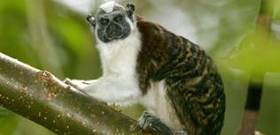Зоопарк El Níspero