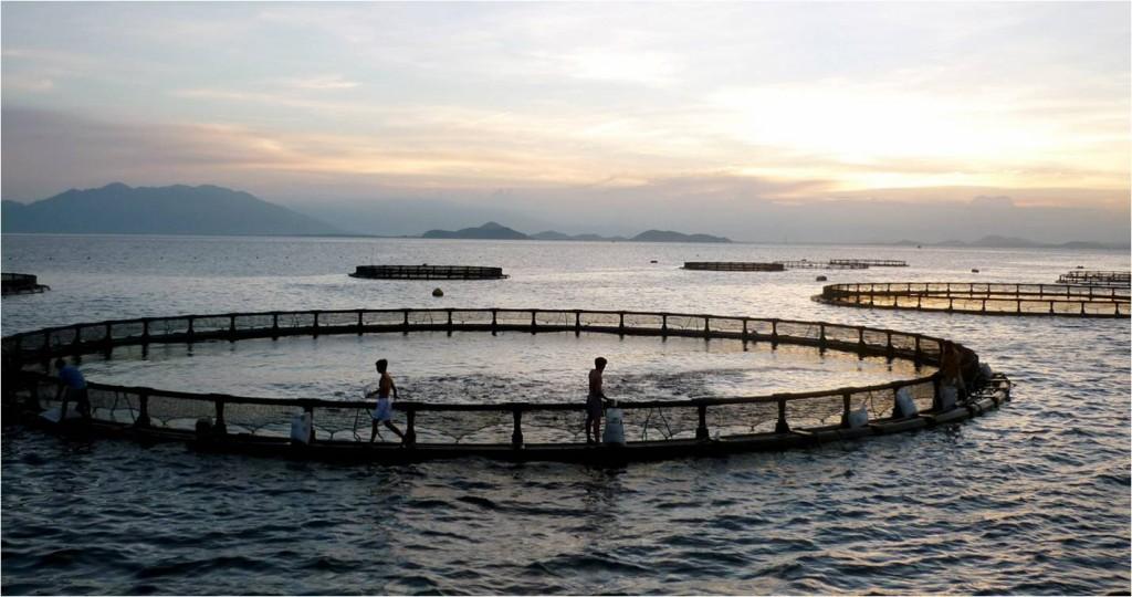 второе гражданство Гренады за инвестиции в бизнес на примере Grenada Sustainable Aquaculture