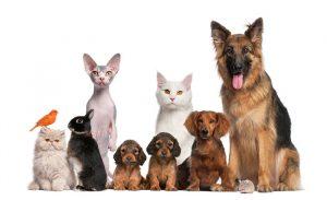 Ввоз домашних животных (собак и котов) в ОАЭ