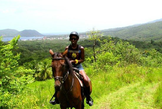 brandy-manor-equestrian