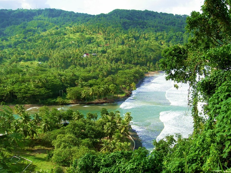 dominica-forest