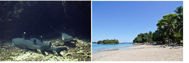 Isla-Coiba