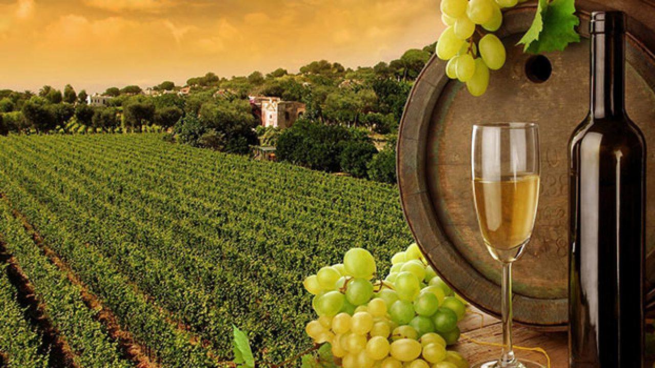 дубай виноградник купить