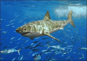 опасные обитатели средиземноморских глубин