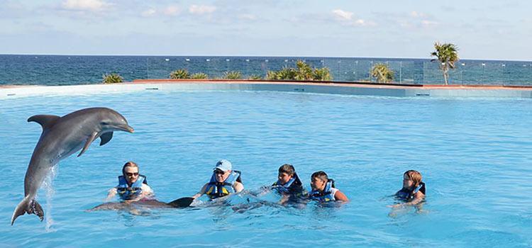 дельфины в Сент-Китс и Невис