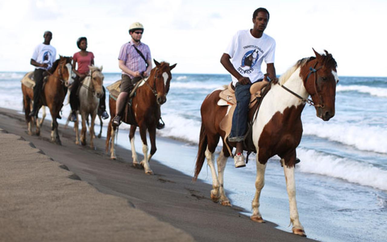 конные прогулки на Сент-Китс и Невис