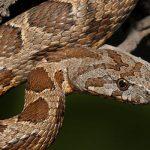 Чего стоит опасаться на Кипре или топ ядовитых змей и пауков на острове