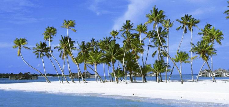 Зарегистрировать оффшорную компанию в Невисе
