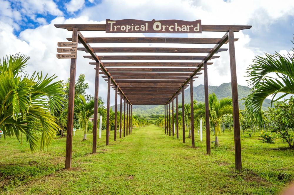 развитие круизного туризма и эко-туризма