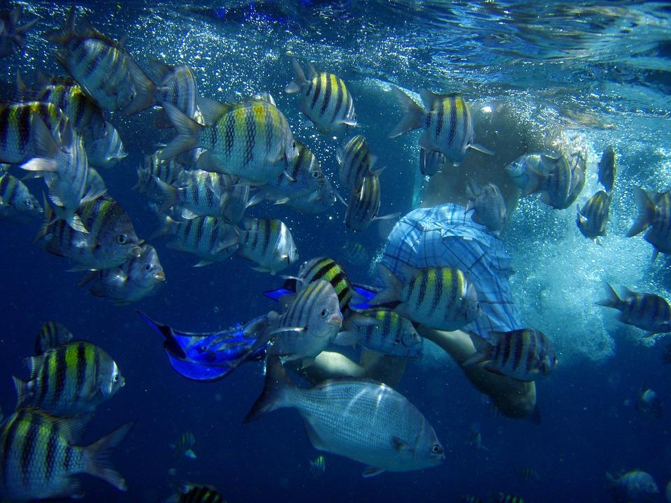 Подводный сентябрь