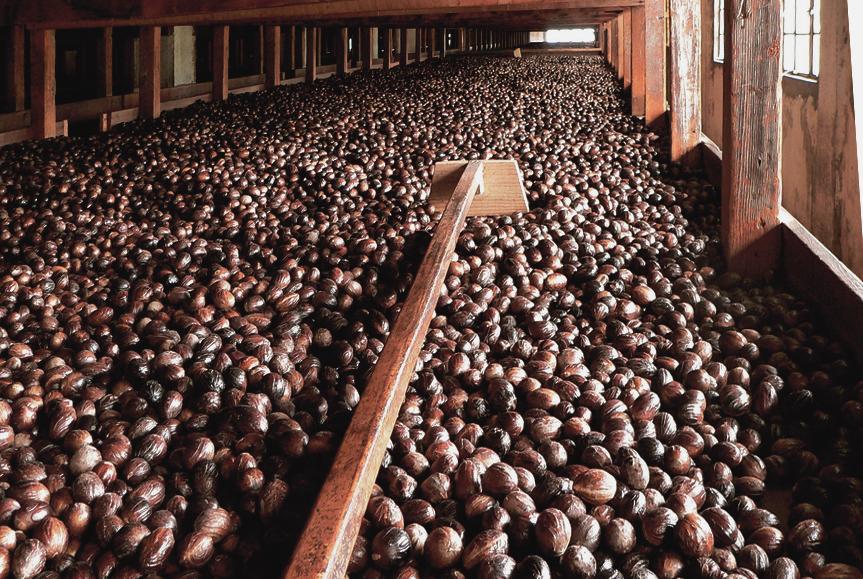 Gouyave Nutmeg Processing Station