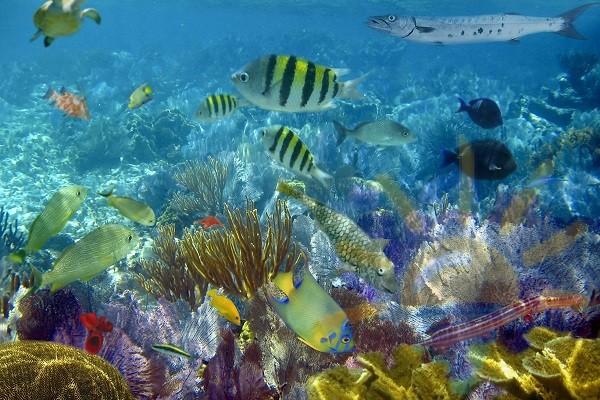 Создаем резидентство на Багамах