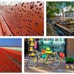 Бизнес-иммиграция в Нидерланды: интересные факты о Голландии для желающих оформить ВНЖ