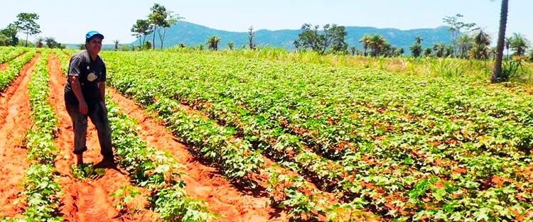 инвестировать в приобретение сельскохозяйственной земли в Парагвае