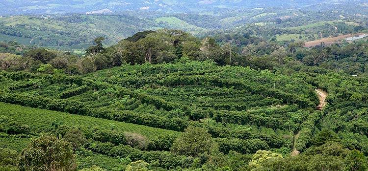 Инвестиции в сельскохозяйственные проекты провинции Чирики, Панама