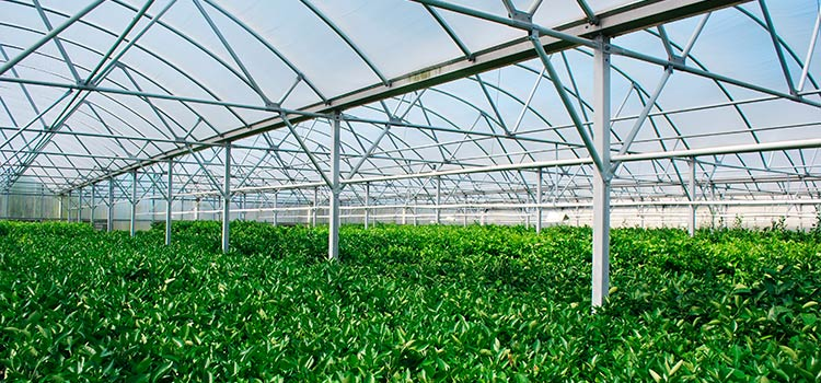 Сельскохозяйственные инвестиции в тепличное овощеводство Парагвая