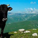 ТОП-5 самых прибыльных направлений сельскохозяйственного бизнеса в Грузии