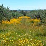 Инвестиции в Уругвай: открываем оливковую ферму