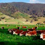 Инвестиции в Уругвай. Топ 5 самых перспективных направлений в сельском хозяйстве Уругвая