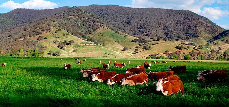 сельскохозяйственный сектор Уругвая