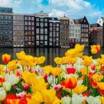 ВНЖ в Нидерландах (Голландии) при покупке недвижимости – Очередная тюльпаномания?