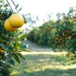 ПМЖ Парагвая за инвестиции в апельсиновые плантации и другие проекты с Agri Terra Group