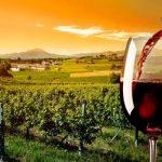 Какие вина внесены в реестр названий мест происхождения в Грузии?