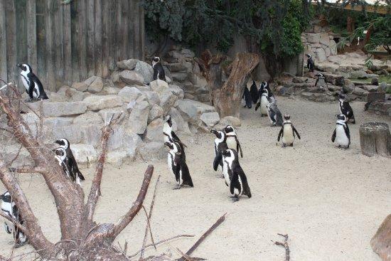 Зоопарк в Мюнстере