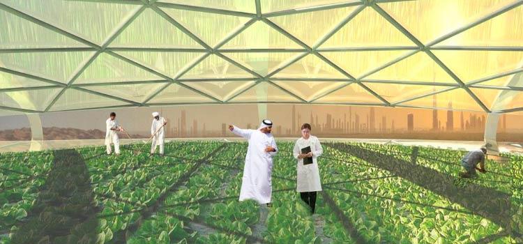 выгоды сельскохозяйственных стартапов в ОАЭ