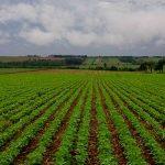 Сельскохозяйственный бизнес в Парагвае в 2020 году