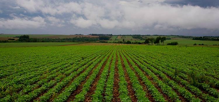 перспективы есть у сельскохозяйственного бизнеса Парагвая