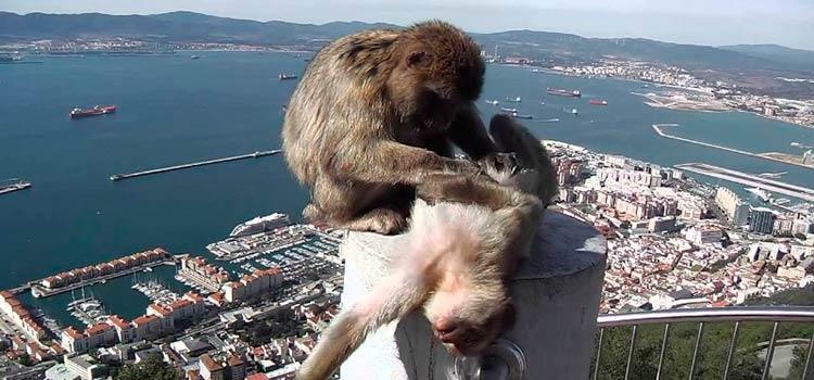 Почему Гибралтар выпускает Кровь Нельсона