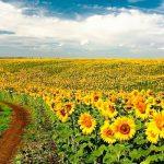 Регистрация ЗАО в Украине – 300  EUR
