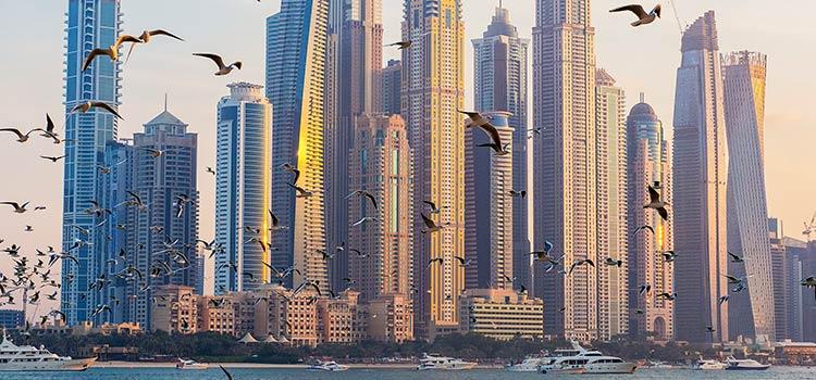 виды компаний в ОАЭ в 2019 году