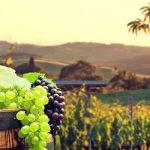 Грузия побила 30-летний рекорд по экспорту вина