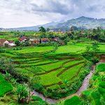Как купить землю в Индонезии в 2020 году? Первая консультация – бесплатно